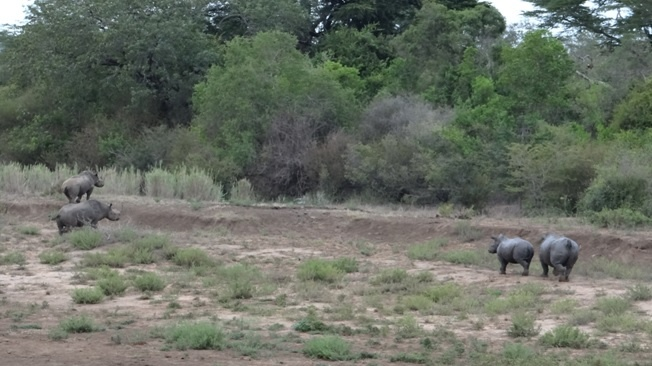 Durban safari tours; White and Black Rhino in same picture