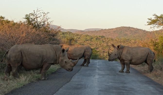 South Africa safari; Rhino