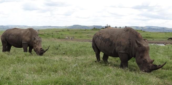 Durban tour; Tala game reserve, Rhino