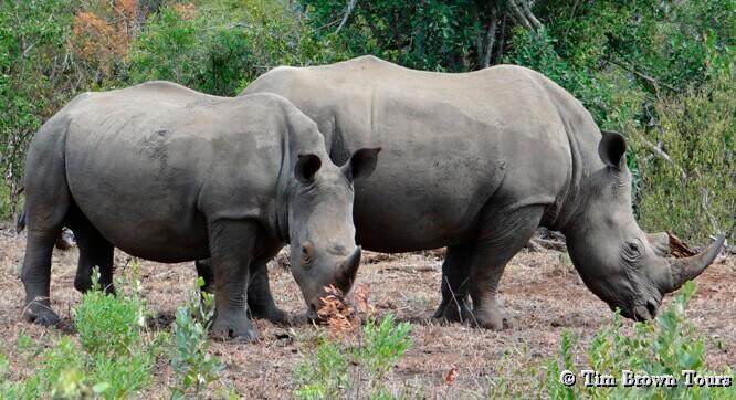 Durban big 5 day safari; Rhino