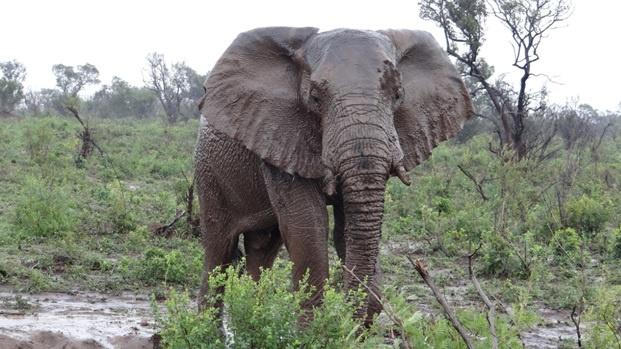 Durban safari tour, Elephant
