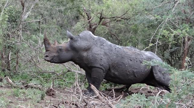 Durban safari tour, Rhino rubbing