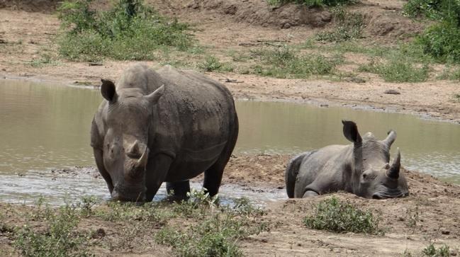Durban day safari; Rhino